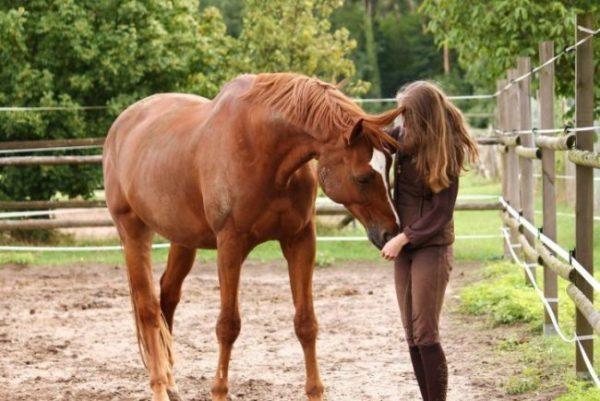 Mädchen schmust mit einem Pferd auf dem Paddock