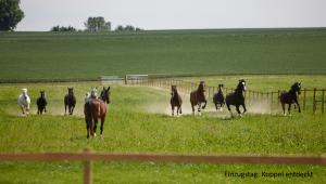 Pferde galoppieren über eine Koppel