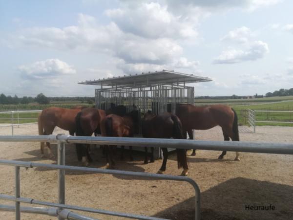 Pferde fressen aus einer Heuraufe