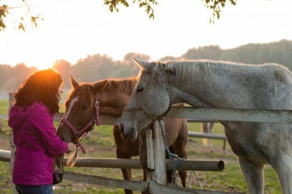 Zwei Pferde die ihre Köpfe über den Koppelzaun strecken und eine Frau, die die Pferde streichelt