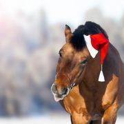 Pferd mit Weihnachtsmütze, dass die Zuge rausstreckt
