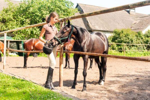 Mädchen streichelt Pferd auf dem Paddock