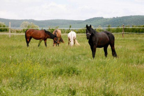 Pferde auf einer Koppel mit hohem Gras
