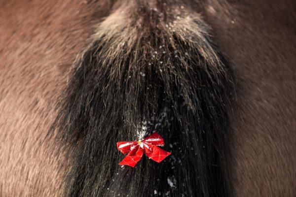Pferdeschweif mit roter Schleife