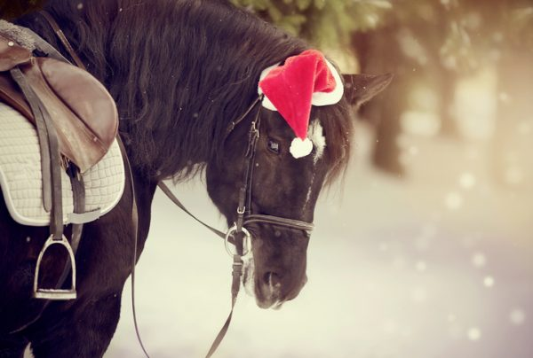 Pferd mit Weihnachtsmütze im Schnee