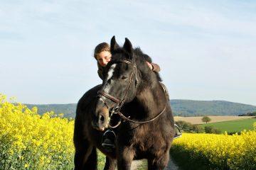 Der Traum vom eigenen Pferd.